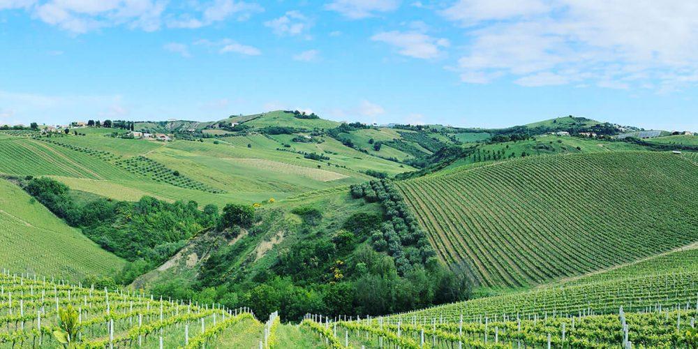 wijngaarden-ciuciu.jpg